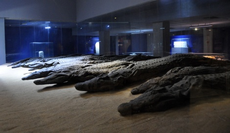 Mummified crocodiles...