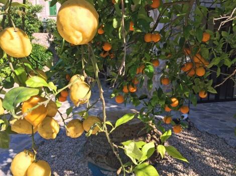 Oranges and lemons...