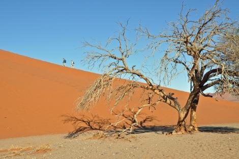 The dunes at Sossusvlei...