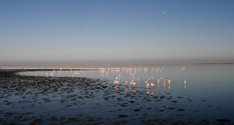 ...and lots of flamingoes