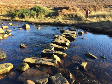Stepping stones along the walk
