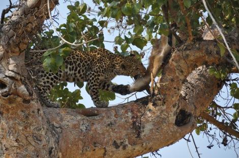 Leopard cub...