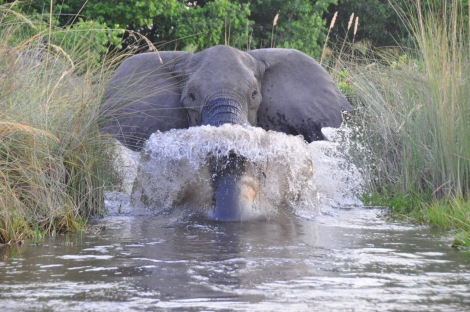 That elephant charge...
